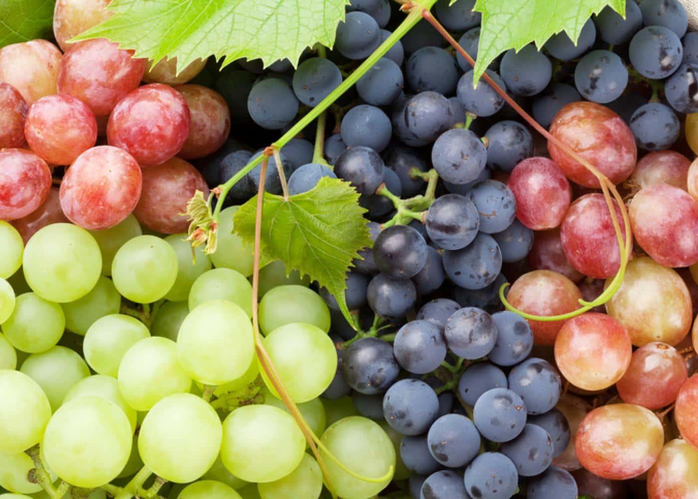 مجلة ألمانية تكشف عن فاكهة يمنية تحارب الشيخوخة - المجلة الطبية